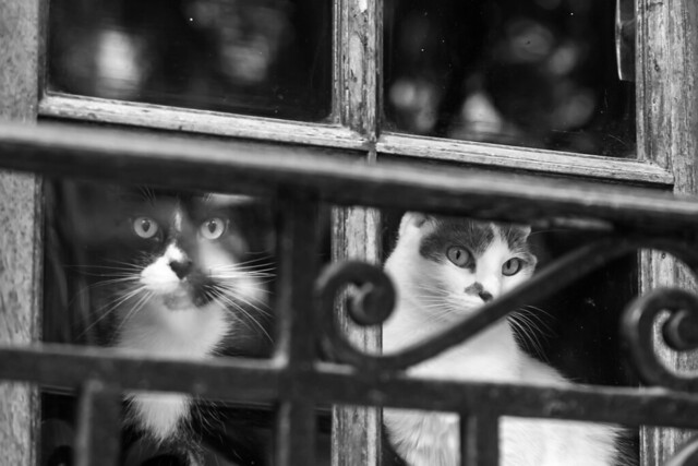 Momentos de la cuarentena. Negro & blanco.