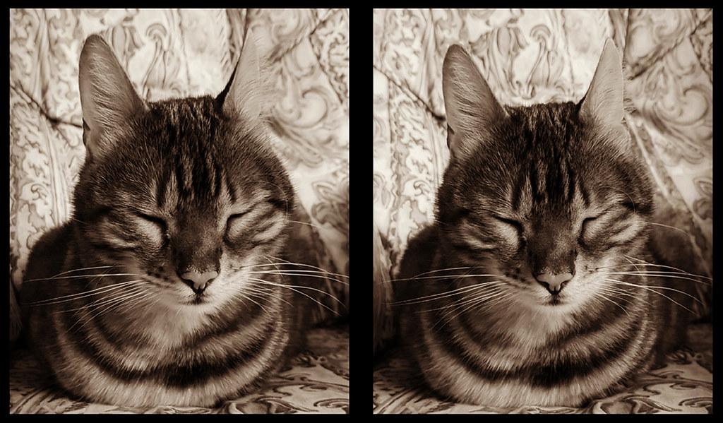 Catsin3D13