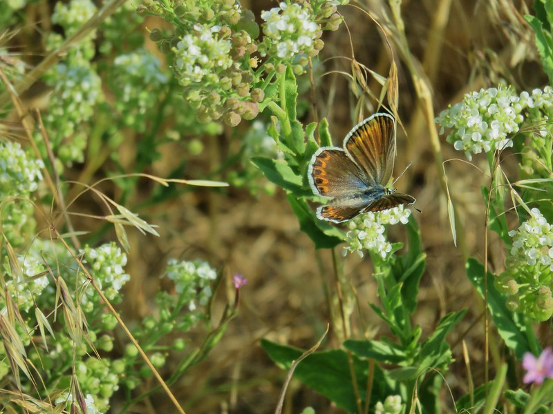 Butterfly at Hart Mountain Antelope Refuge