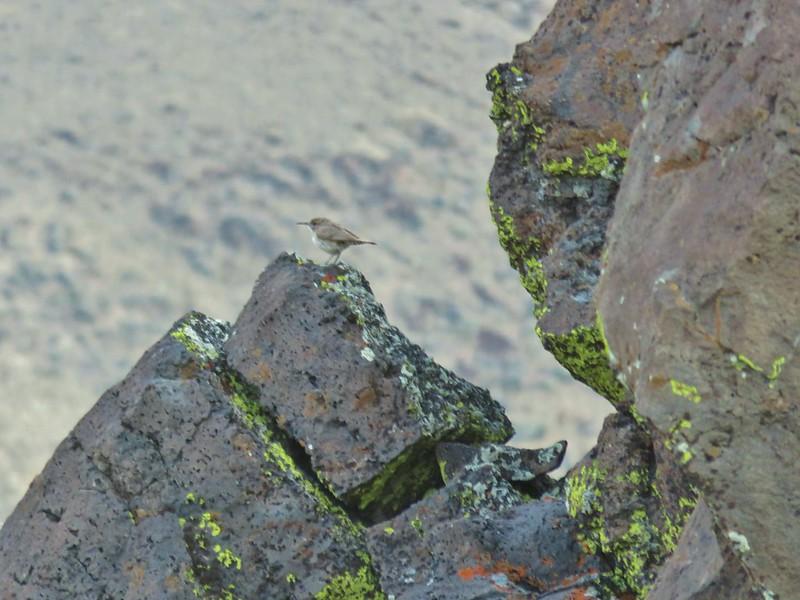 Bird at Hart Mountain Antelope Refuge