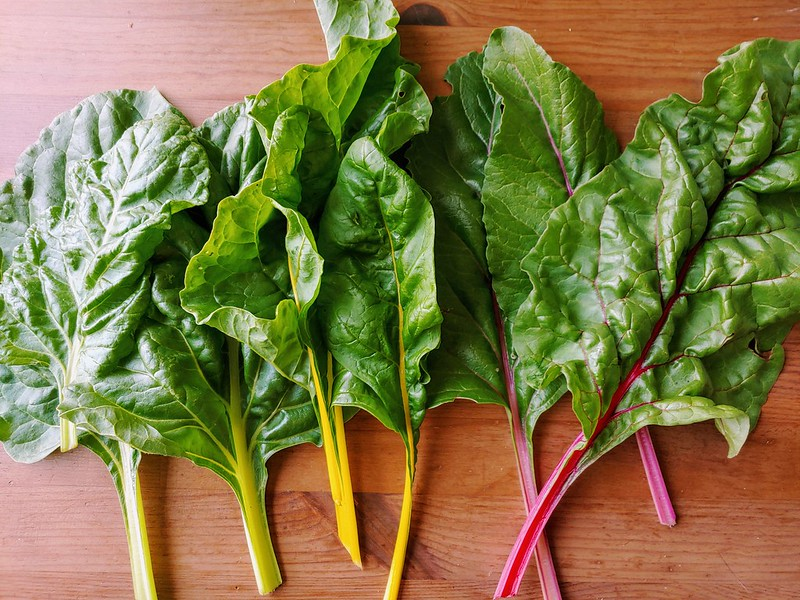 Bright Lights Swiss Chard  grown from eBay/southeastseeds seed