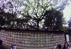 Yoyogi park sake barrels