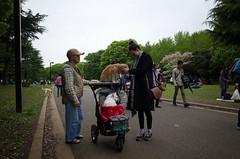 Yoyogi Park, Tokyo, April 2016
