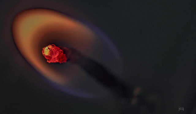 Flor de fuego 1.  Fire flower 1.  HMM :)