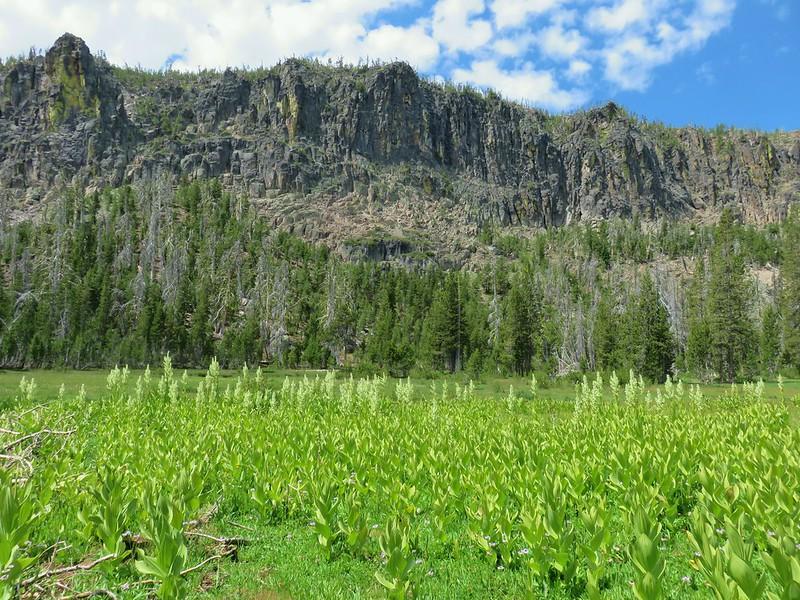 Meadow below Gearhart Mountain