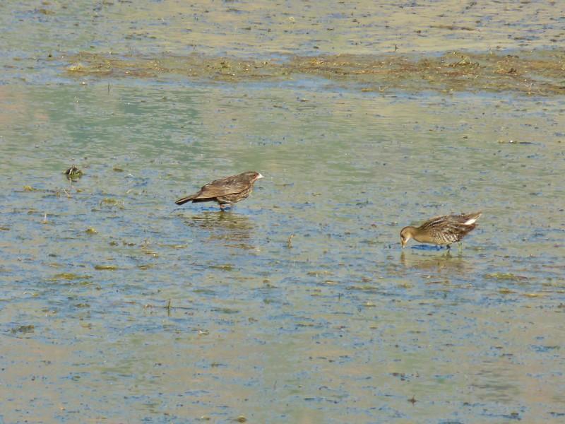 Birds at Summer Lake Wildlife Area