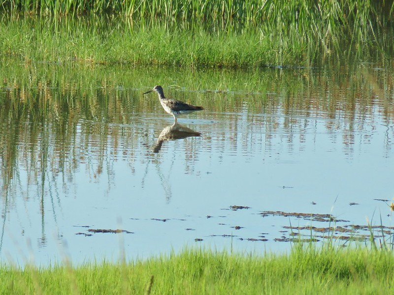 Bird at Summer Lake Wildlife Area