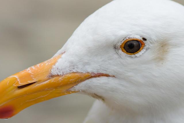 My Pet Seagull