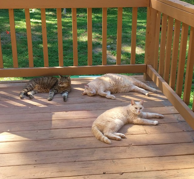 Cats Resting on the Deck