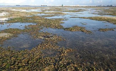 Seagrasses at Terumbu Pempang Laut, Jul 2020