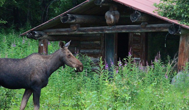 Visitor to the Cabin