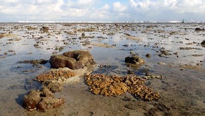 Living shores of Terumbu Pempang Laut, Jul 2020
