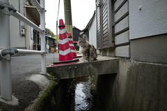 Naoshima cat, Japan, April 2016