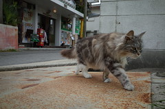 Naoshima cat, Japan, April 2016