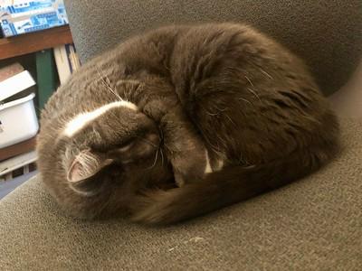 Crick on office chair