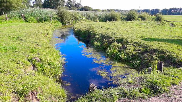 Un des canaux dans le marais de Sougeal.