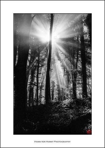 Sunlight through the trees | by Hans ter Horst Photography