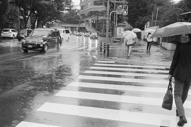 Rainy Crossing
