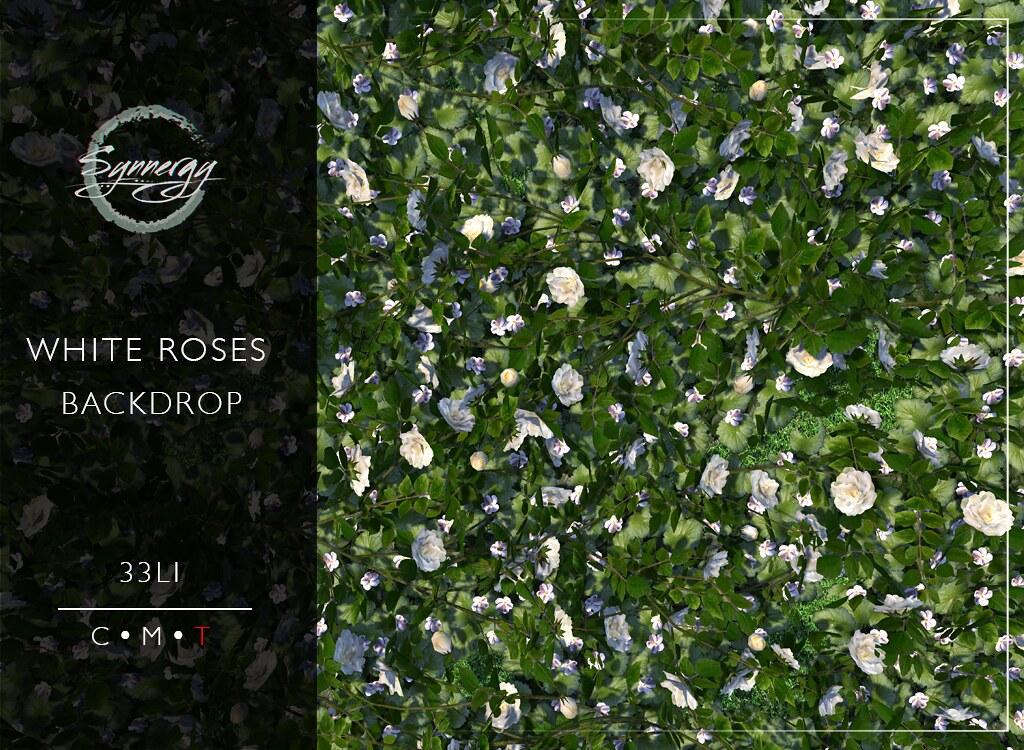 Synnergy White Roses @Mainstore Release