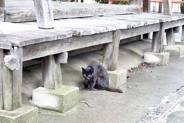 Today's Cat@2020ー07ー26