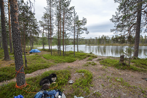DSC_3001 | by adventurelandlapland