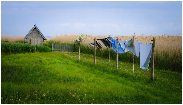 On the clothes line