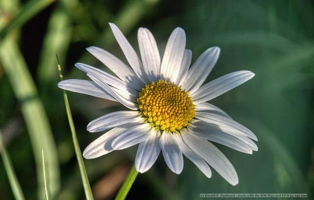 Daisy - in the shade on Sunday