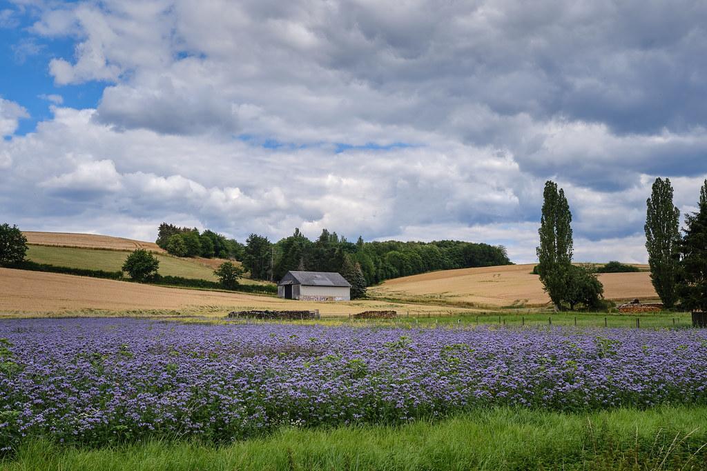 Der Taunus, eine Mischung aus Toscana und Provence :)