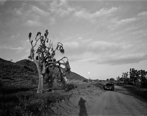 Joshua Tree NP - Covington Flats with Moonrise (12)