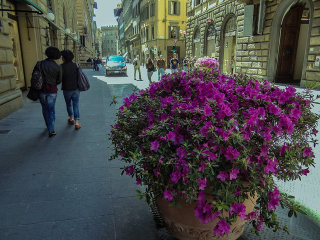Street flowers.