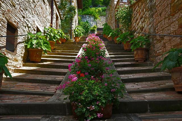 scale con fiori