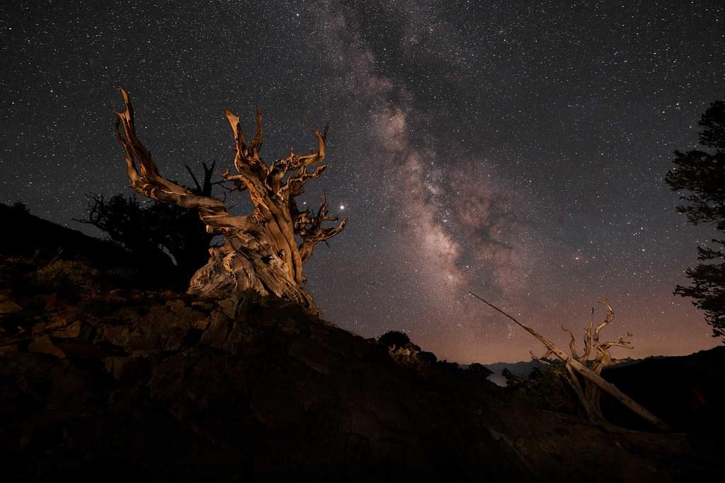 Bristlecone Pine at Midnight