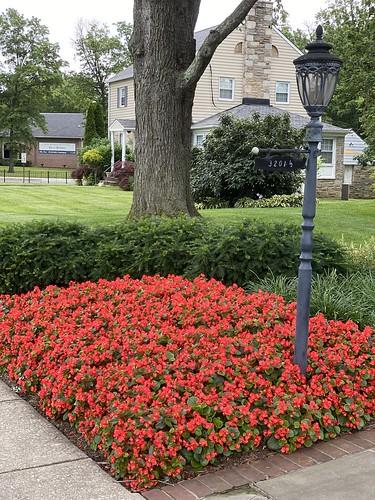 baltimore maryland neighborhood flowers lamppost trees bushes houses iphone
