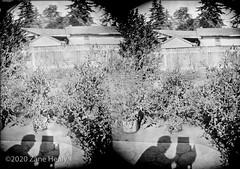Cross-View 3D