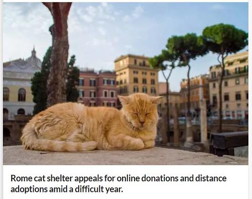 ROMA ARCHEOLOGIA E RESTAURO ARCHITETTURA 2020: COVID-19, Rome cat shelter appeals for online donations and distance adoptions amid a difficult year. WANTED IN ROME & Gatti di Roma / Roman Cats. Facebook (26/07/2020) & La Repubblica (28/06/2020).