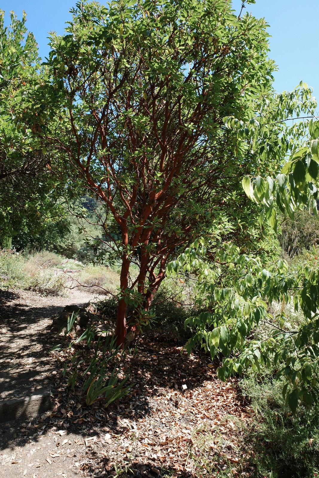 this tree looks like an Oompah Loompah