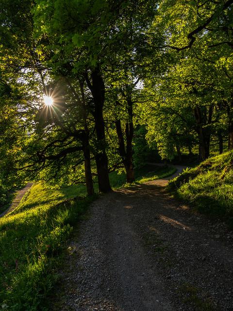Under glowing leafs - Unter leuchtenden Blättern