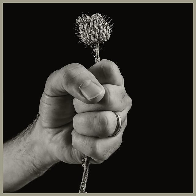 Plant #6 2020; Grasping the Nettle