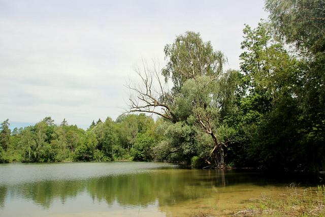 Isarmündungsgebiet IMG_5677
