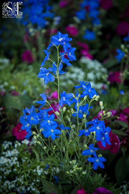 Bold Blue Flowers