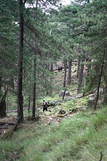 Dans les sous-bois à la descente vers les bergeries de Luviu