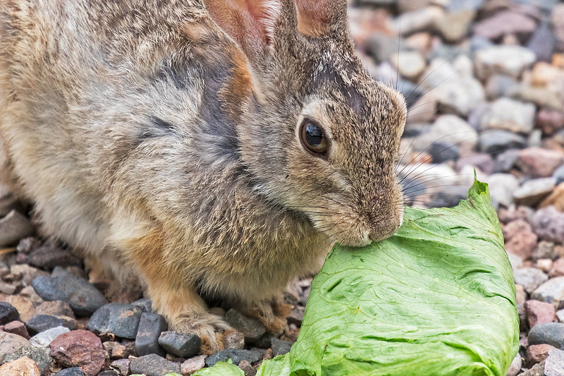Rabbit-2-7D2-072420