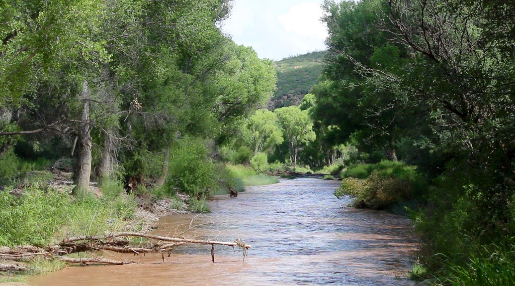 photo of San Pedro River
