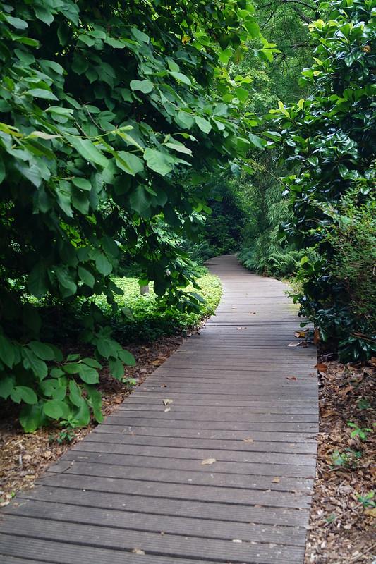 S3.Botánico_paseo