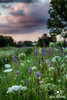 Late July in the Meadow