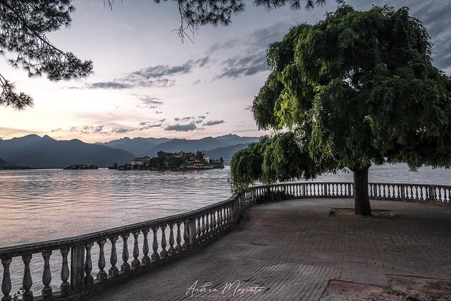Albero degli innamorati - Stresa (Italy)