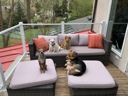 Dogs on balcony