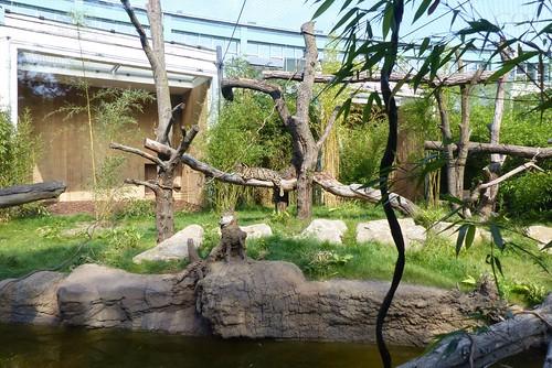 Clouded Leopard enclosure..