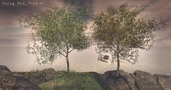 The Little Branch - Young Oak Tree v2 @ Cosmopolitan