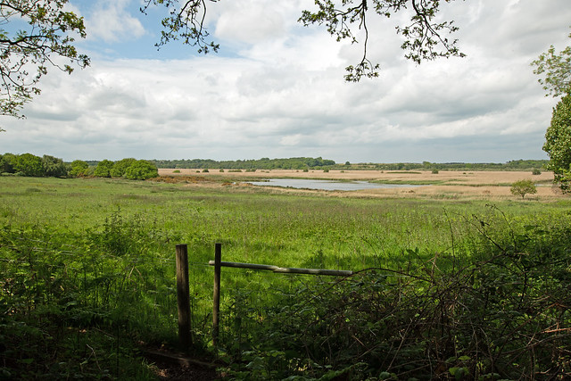 Walberswick marsh